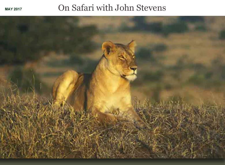 On Safari with John Stevens